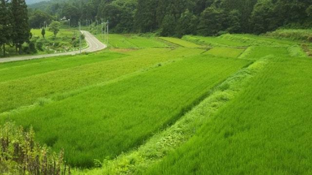 三竹沢団地