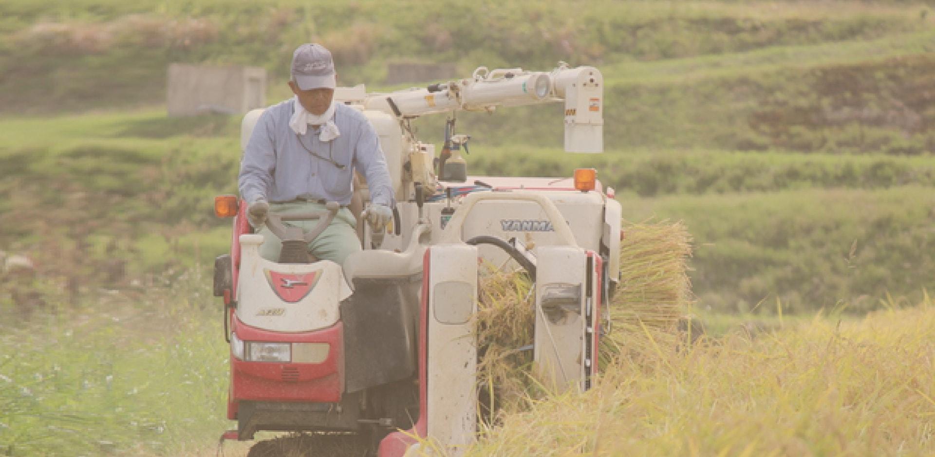農家のおじいさんがお米を収穫しているシーン