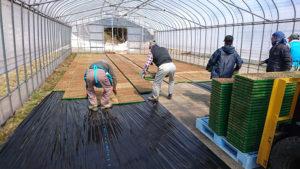 ブログ画像:大島農業